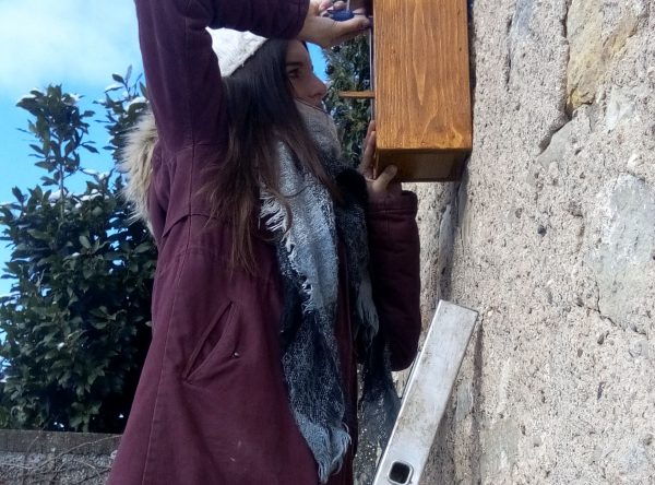 cmj cabane oiseaux 2018 (5)